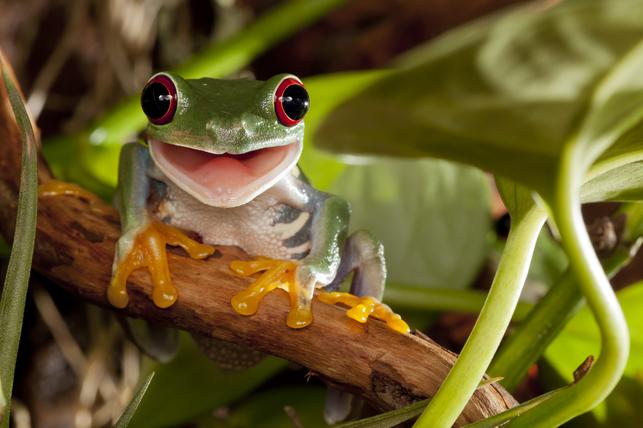 frogfeat.jpg